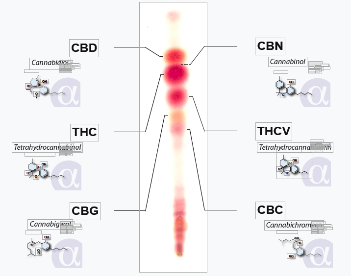 How does ALPHA-CAT Cannabinoid test kit works for THC and CBD ?
