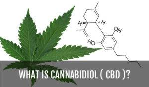 what-is-cannabidiol