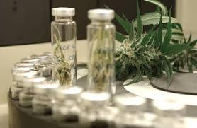 cannabis-analysis