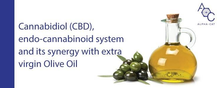 You are currently viewing Kanabidiol (CBD), ECS a jeho synergie s extra panenským olivovým olejem