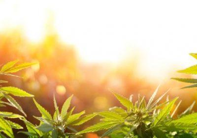 5 façons comment l'huile de CBD change les perspectives de la médecine