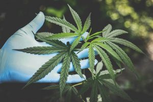Read more about the article 6 Effective Tips to Grow Your CBD Business Online