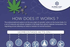 Read more about the article What is CBD?